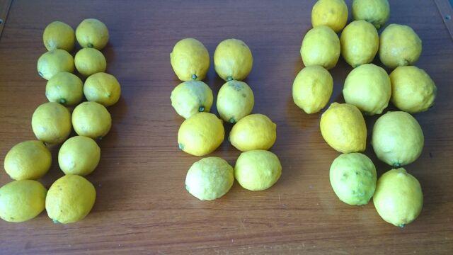 レモンは全部で32個