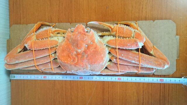 すわいがにの横のサイズは43cm