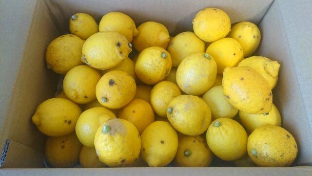 箱にぎっしり入った訳ありレモン5kg