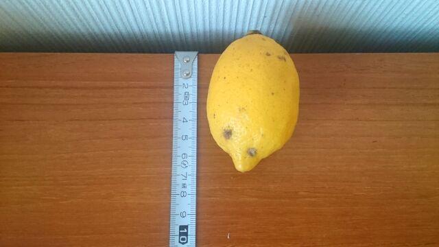 一番小さいレモンは7cm