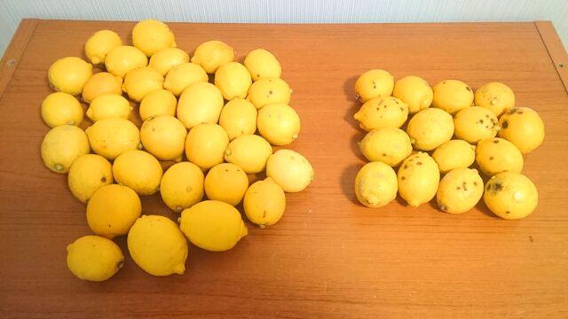 綺麗なレモンが3分の2、見た目が悪いレモンが3分の1