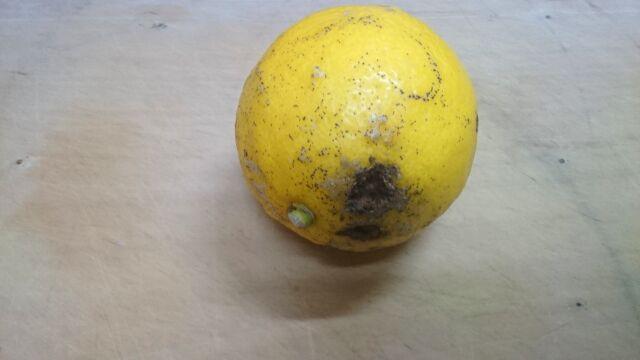 見た目が悪いレモン