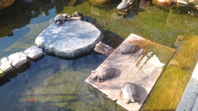 お亀明神社の亀