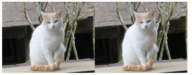 横にピッタリくっついた猫画像
