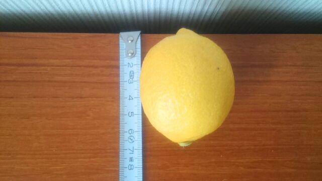一番小さいレモンは約7cm