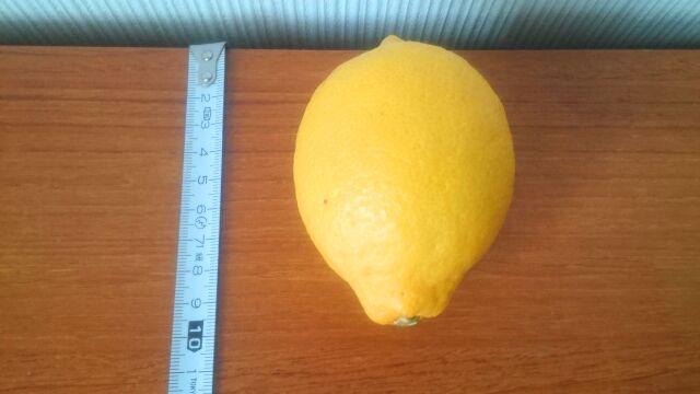 一番見た目が良かったレモン