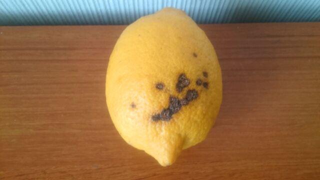 一番見た目が悪かったレモン
