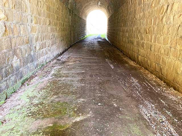 トンネルの地面はところどころ苔むしている