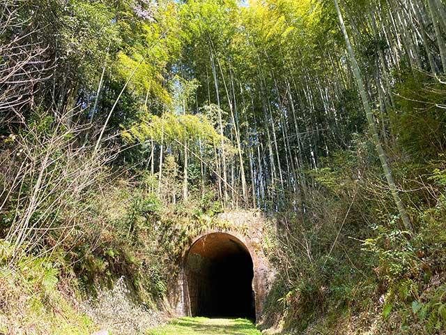 大棚トンネルの上は竹林