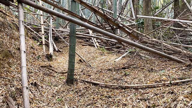 登山道の最初は倒れた竹だらけ!