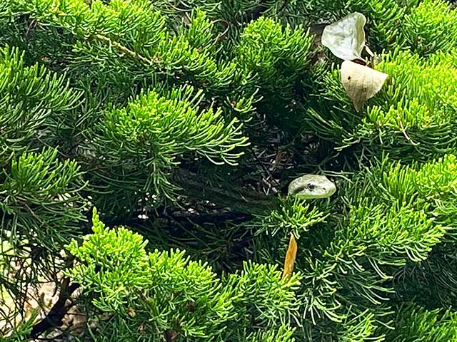 木の中にいるヘビ