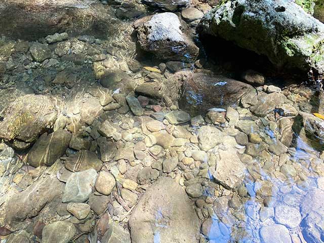 特仙の滝のきれいな水
